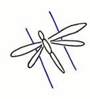 Logo Artenhilfsprogramme für ausgewählte FFH-Libellenarten in NW-Deutschland